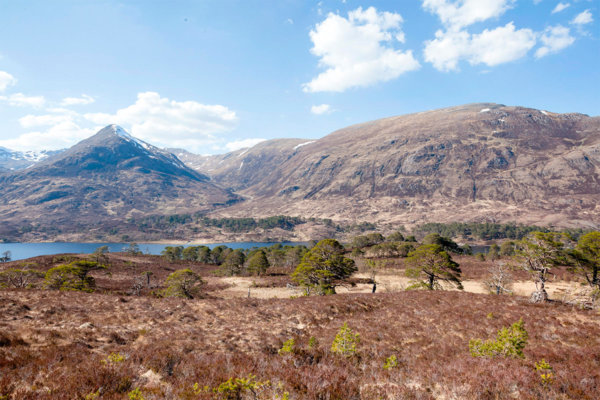 rewilding the caledonian forest in the scottish highlands with trees for life, by Jody Daunton